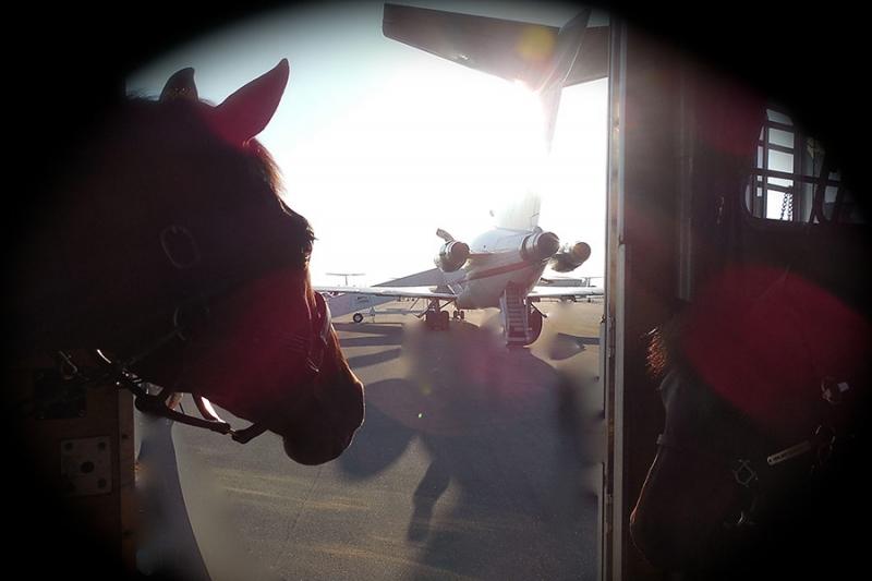 Import und Export von Pferden